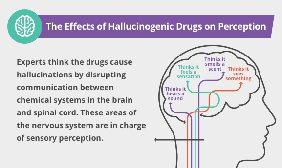 someone who takes hallucinogens is risking which of the following outcomes-0