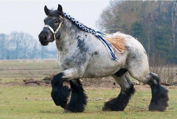 what is a person who shoes horses called-3